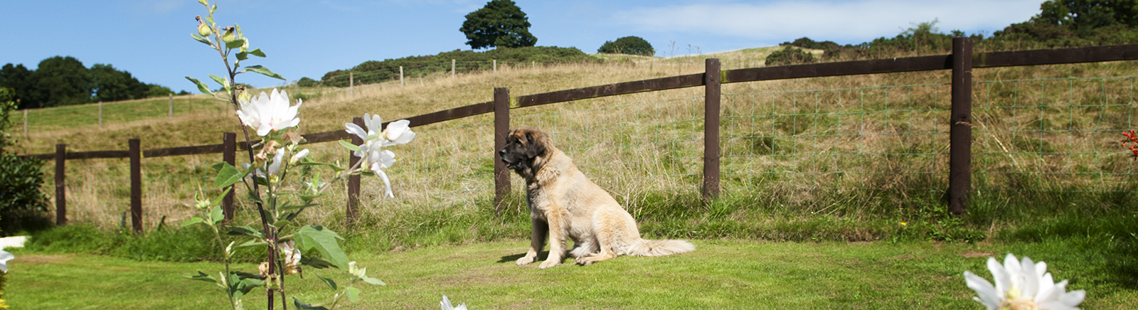 Dog Friendly Bed And Breakfast Cornwall